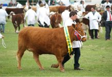 The finest cattle will be one of the features of the show