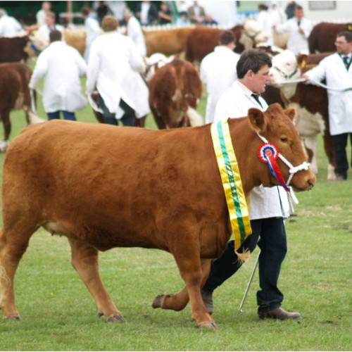 There's something for everyone at the Shropshire County Show this Saturday