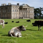 Attingham Park's landscape is being celebrated. Photo: National Trust.