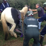 Specialist animal rescue crews begin to help free the stuck horse. Photo: @SFRSWellington.