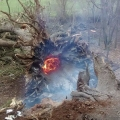 The fire inside the tree which fell and injured a man on Haughmond Hill. Photo: Barrie Mansfield