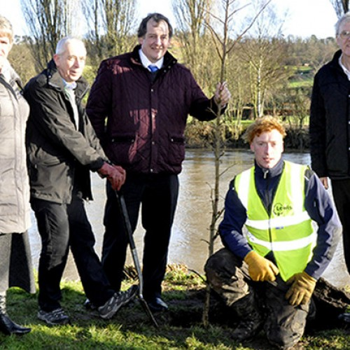 Trees planted on Bridgnorth's riverside as part of regeneration