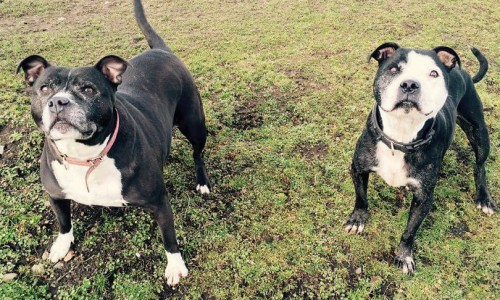 Shropshire rescue dogs seek home together after their owner dies