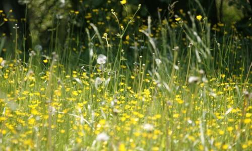Hay fever season is here – make sure you're prepared