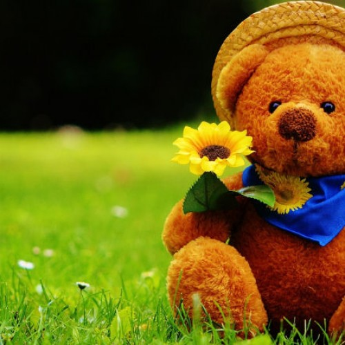 Teddy Bear's Bank Holiday Picnic at Dudmaston