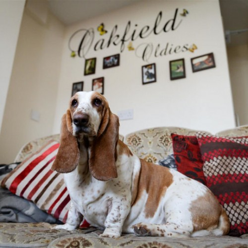A look around the UK's only Old Age Dogs Home!