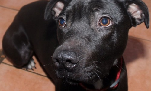 Shropshire dog rescue wants adopters to go 'back to black'