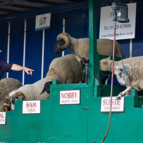 Animal acts take centre stage at Newport Show