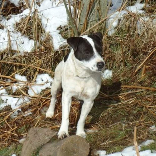 Appeal after Jack Russell is stolen from property in Bridgnorth