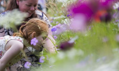 National Trust summer showstoppers in Shropshire