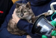 harriet-the-cat-revived with pet oxygen mask