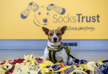 Cinnamon the Jack Russell sits proudly in front of the newly rebranded Socks Trust welcome desk