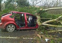 The tree fell across the front of the car. Photo: West Midlands Ambulance Service