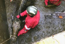 The cow was rescued from a slurry pit at a farm in Longslow. Photo: @SFRS_Mark_w