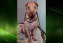 The dog's condition deteriorated after being rescued