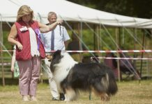 Entries have opened for the popular pedigree dog show as part of Newport Show