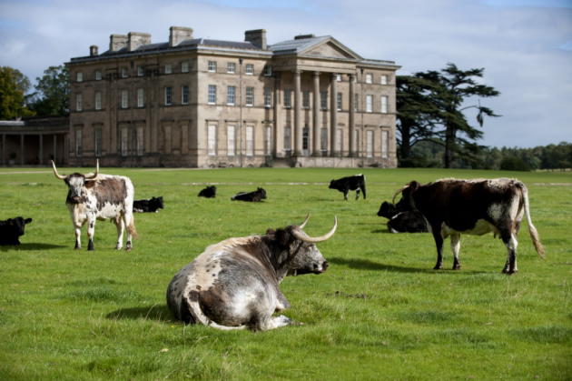 Volunteers are required for a variety of roles, including a mansion guide at Attingham Park. Photo: National Trust.