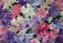 Highly Perfumed Mixed Spencer