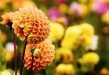 Shrewsbury Flower Show 4
