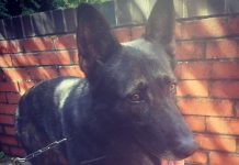 Canto is currently recovering at home with his handler following surgery
