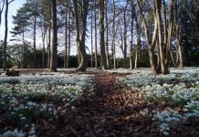 Snowdrops at Attingham. Photo: ©National Trust/Sean Hattersley