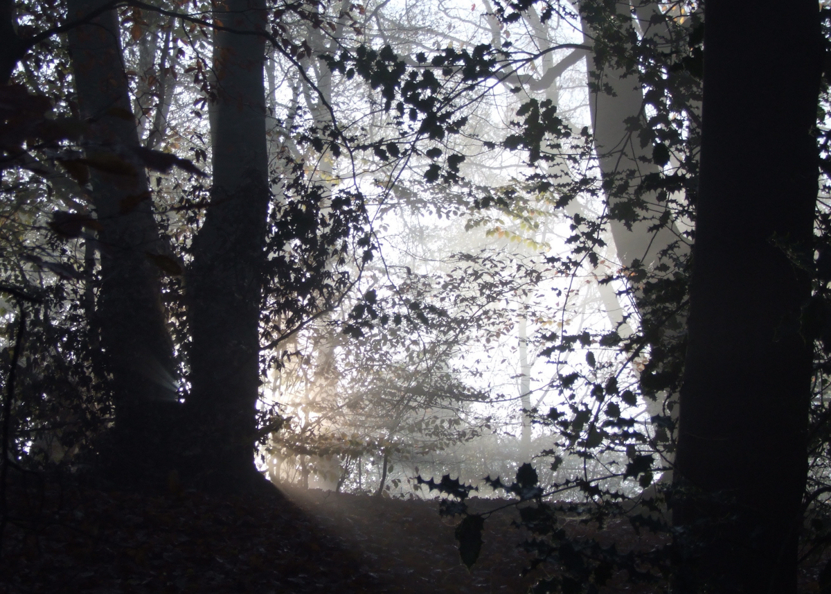 The sun shines through trees at Mortimer Forest near Ludlow