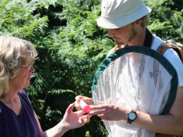 Experts discuss specimens at the Hillfort BioBlitz. Photo: Neil Phillips