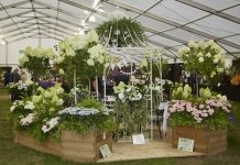 Shrewsbury Flower Show is one of the biggest events in the Midlands