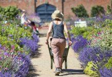 Attingham's Walled Garden