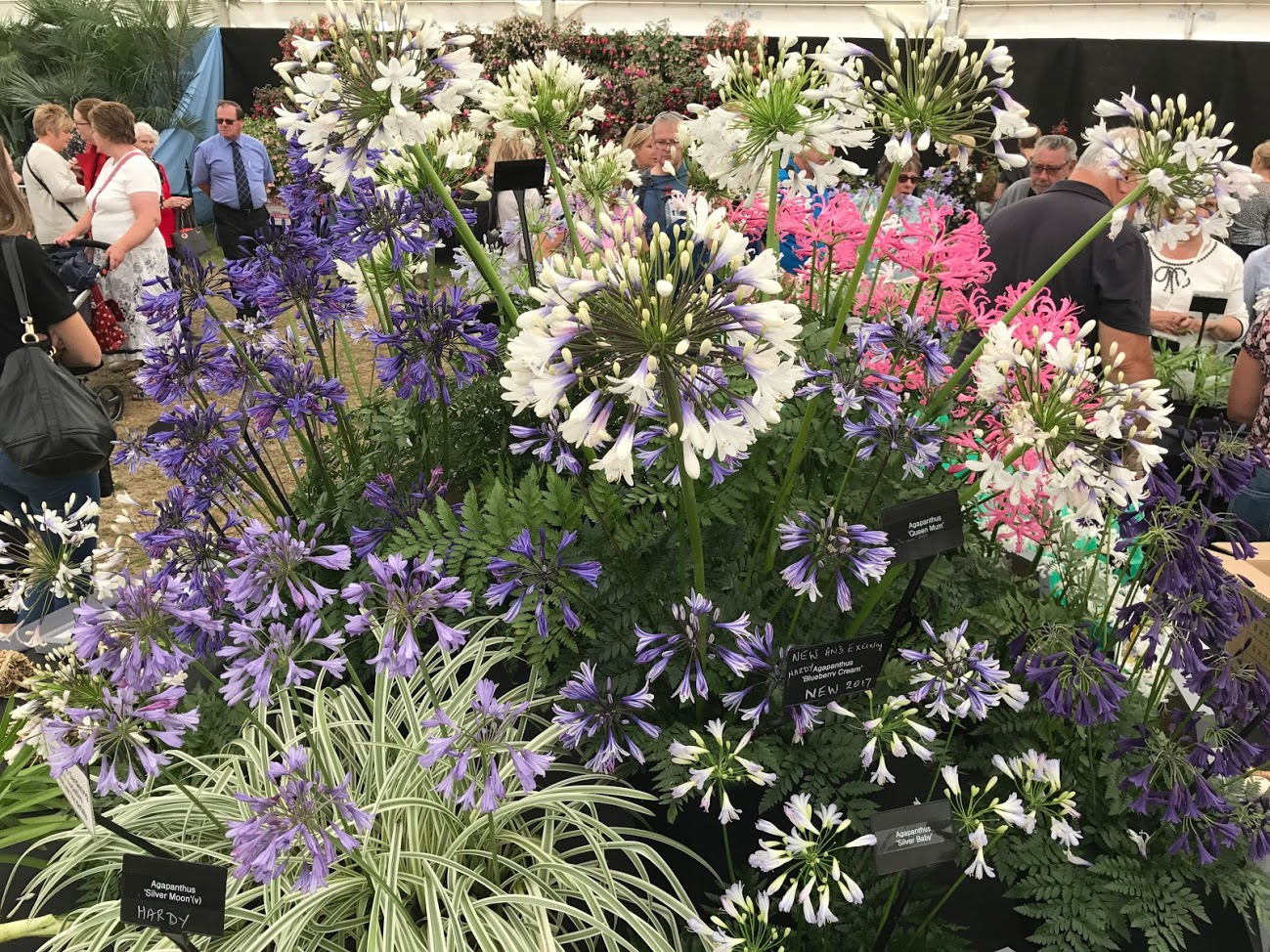 Quarry Marquee is home to the top national nurseries and growers