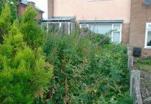 The overgrown garden at the property in Wellington. Photo: Telford & Wrekin Council