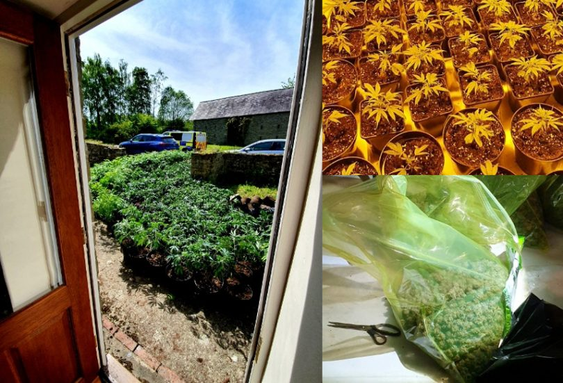 Over 500 cannabis plants, were discovered and incinerated including a number of industrial sized bags full of ready-to-sell cannabis buds. Photo: West Mercia Police