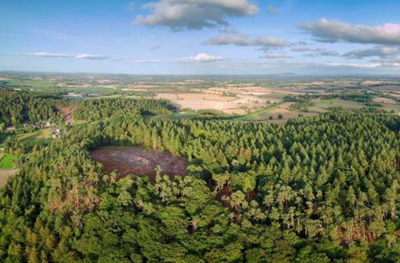 Nesscliffe Hillfort. Photo: Shropshire Council