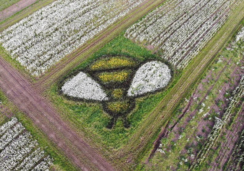 Shropshire Petals 17-metre bee made from wildflowers in white, black and yellow