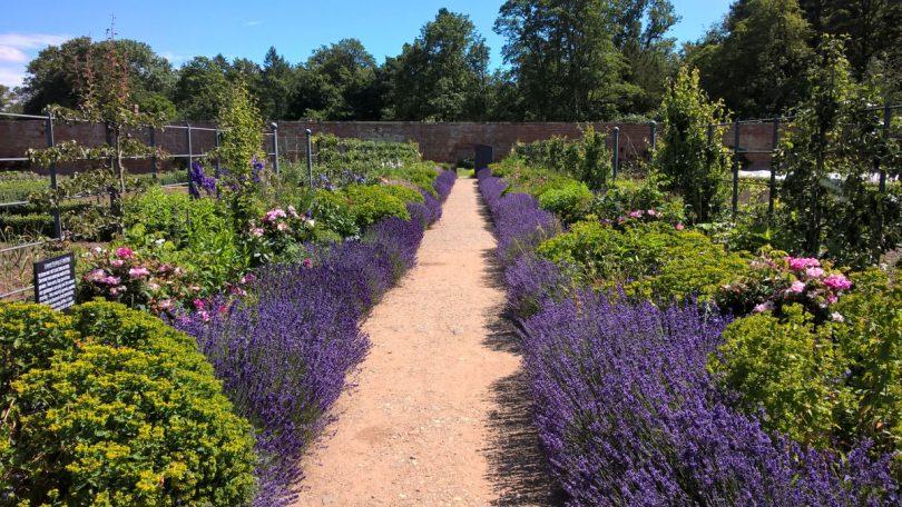 The Walled Garden at Attingham Park. Photo: National Trust/Rachel Barnes