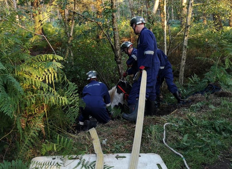 Bruce the horse was rescued after becoming stuck in a ditch. Photo: @SFRS_Whitchurch