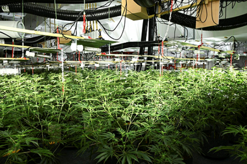 The estimated street value of the cannabis farm was £1.2 to 1.6 million. Photo: West Mercia Police