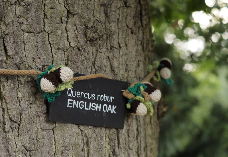 Nature inspired knitted creations are on display for Woollen Woods at Attingham Park. Photo: National Trust/Jayne Gough