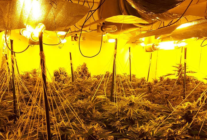 More than 100 mature cannabis plants were seized from a property. Photo: West Mercia Police