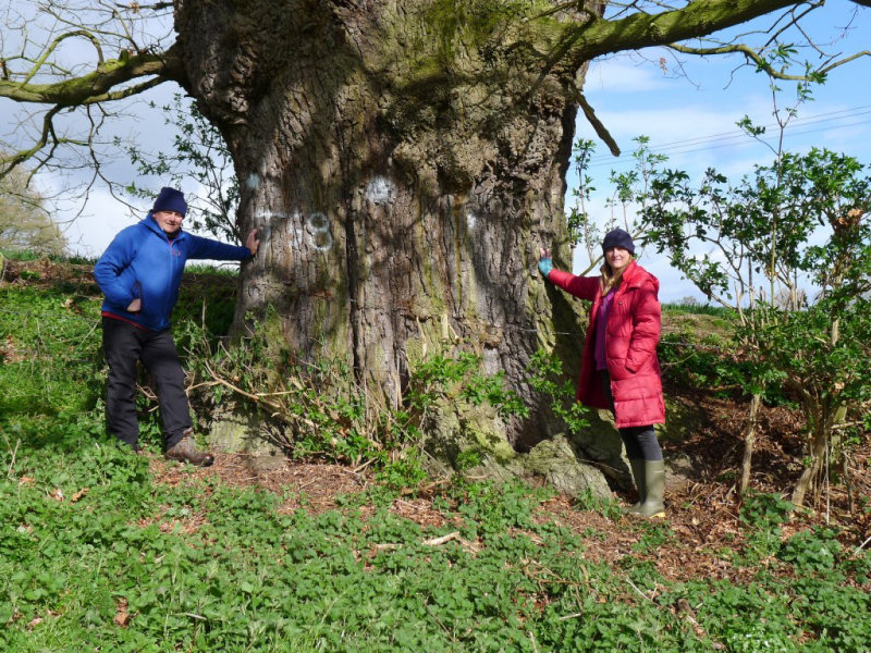 The Darwin's Oak, referred to as T58 by the council, has already been marked for felling, even though the planning application hasn't even been approved.