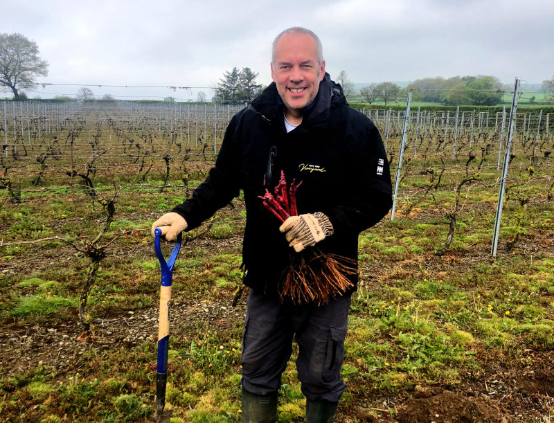 Russell Cooke planting the new Pinot Noir vines