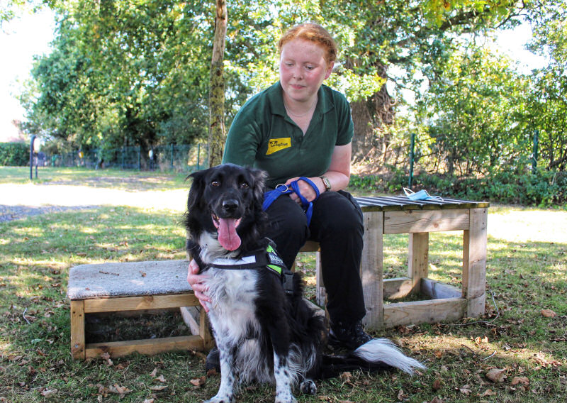 Canine Carer Ella Humphries is pictured with Collie Cross, Speedy, at Dogs Trust Shrewsbury
