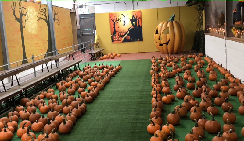 Pumpkin alley at Park Hall Farm